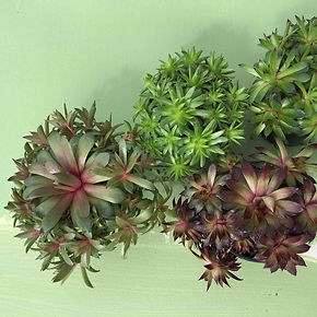 Inspirationen aus der Natur für ein Farbkonzept