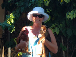 cat and chook