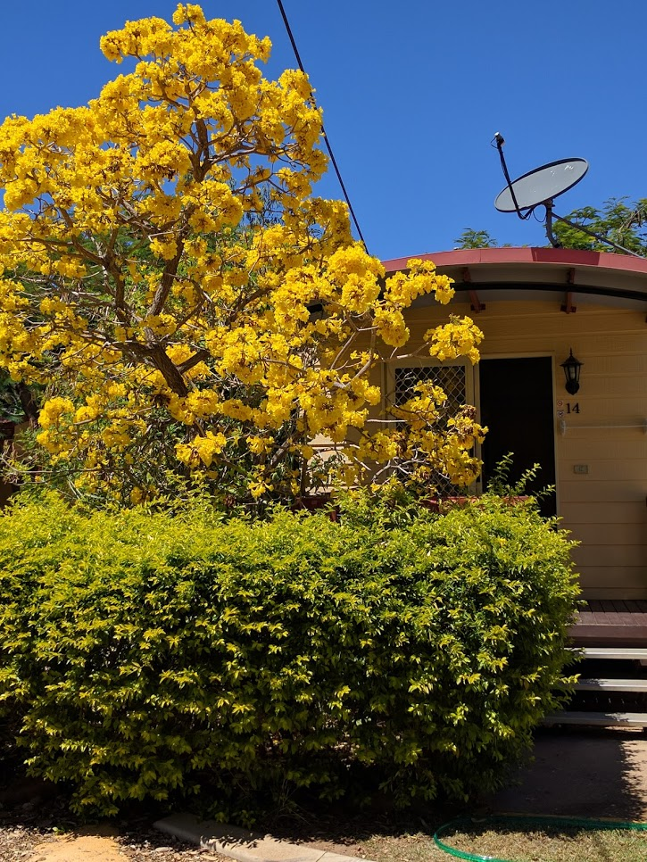 CabinYellowTree
