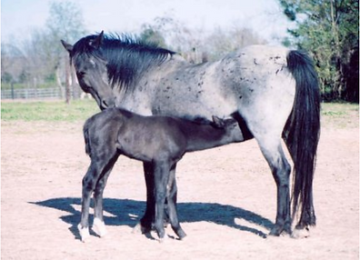 Stuck On You and Foal.png