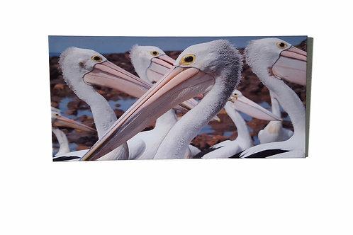 Pelican Canvas