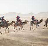 Desierto del thar intrips