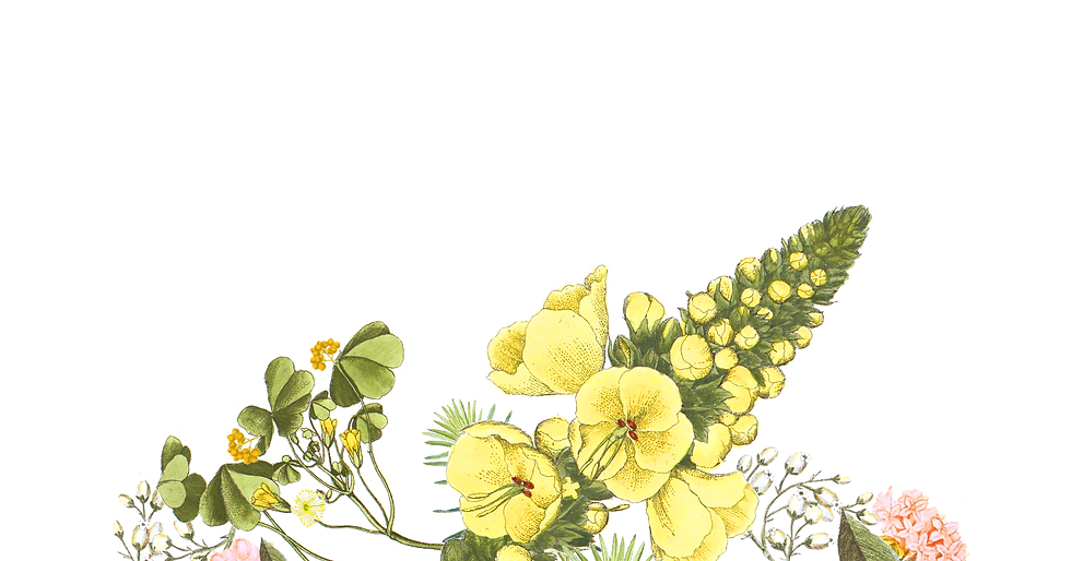 Illustrated Flowers_edited.png