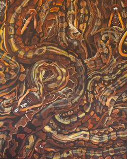 African rock Pythons L