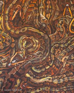 African rock pythons