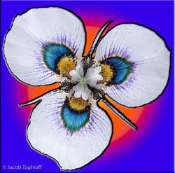 3 petals