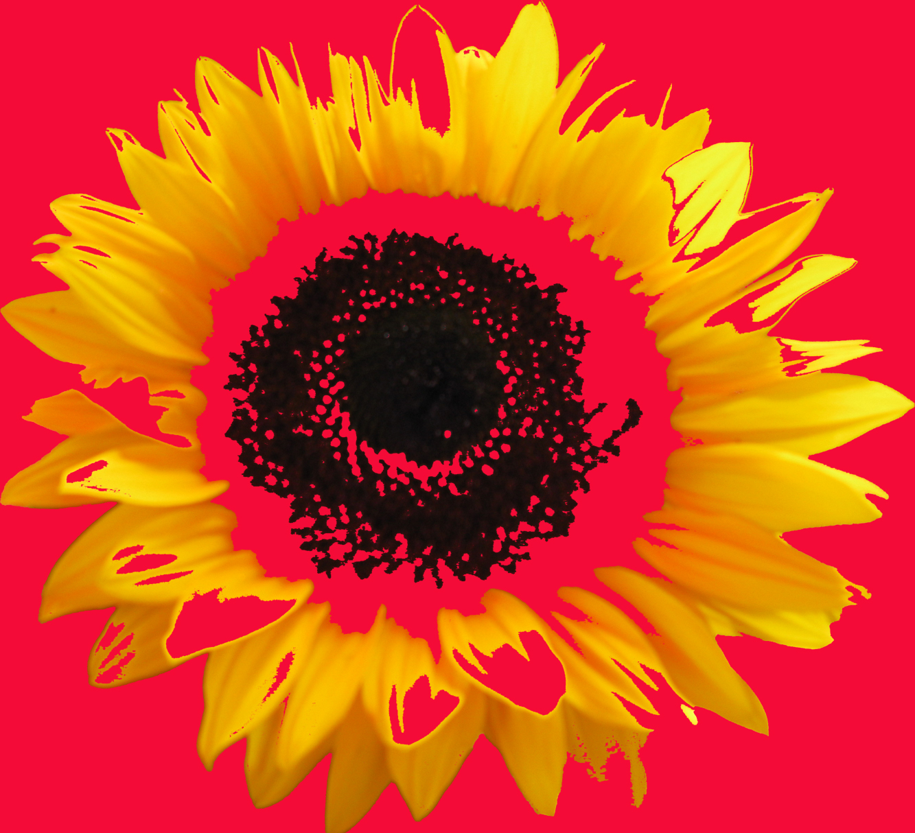 Digital Sunflower