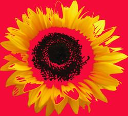 Digital Sunflower