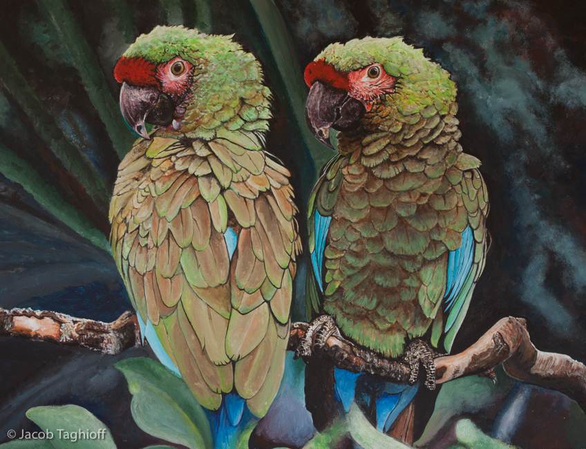 Paired Parrots