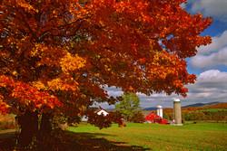 Dan 4 Cor Farm Fall