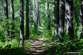 ELSP - Vista Trail.jpg