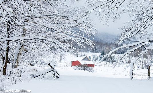 snowy heifer barn.jpg