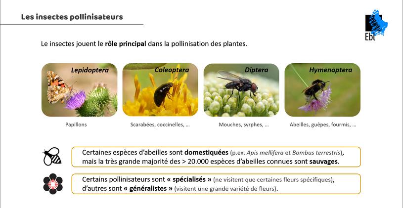 Les insectes pollinisateurs 1