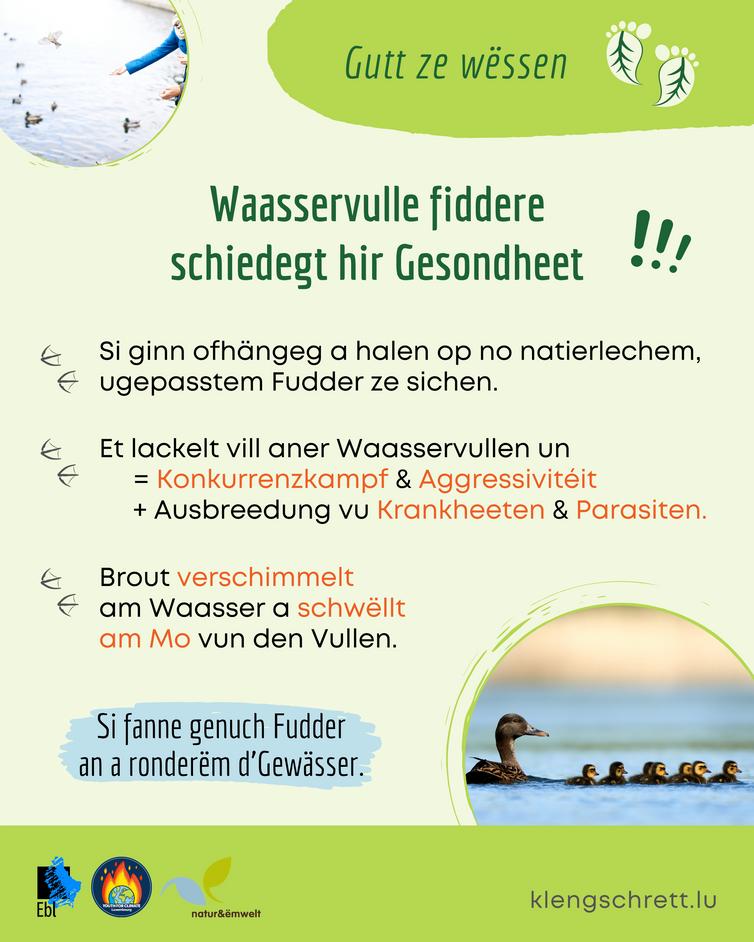 Kleng Schrett_Well Deieren_Fakt 11_LU.pn