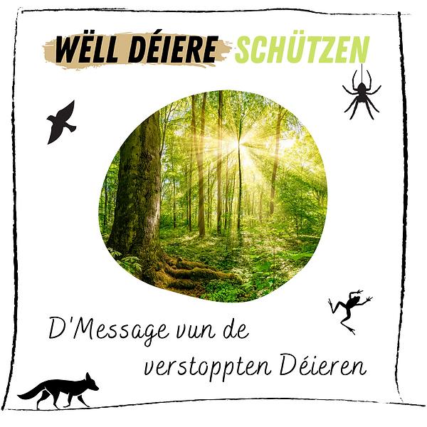 Kleng Schrëtt - Spill - Wëll Déieren - L
