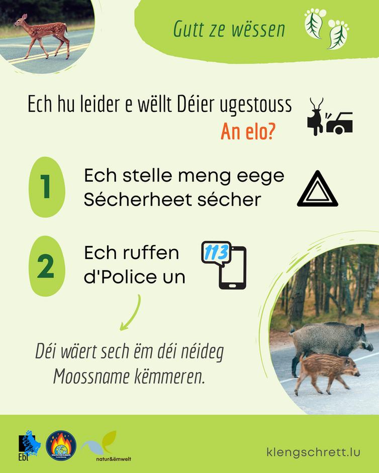 Kleng Schrett_Well Deieren_Fakt 12_LU.pn