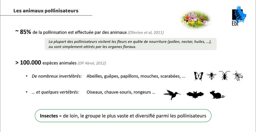 Les animaux pollinisateurs