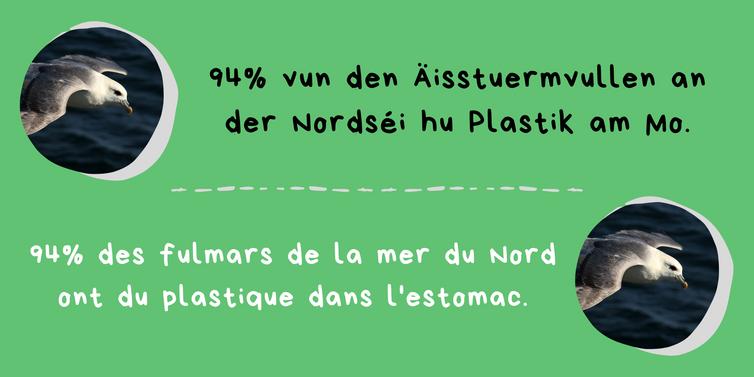Plastik - Fakt 5.png