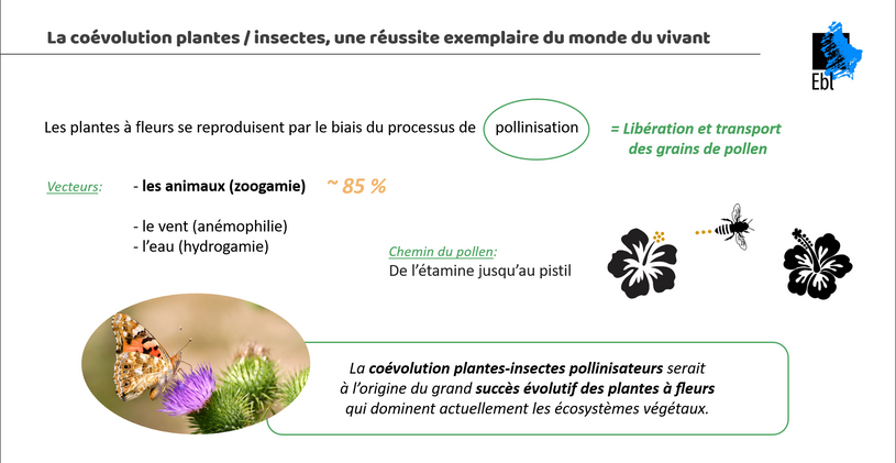 La coévolution plantes / insectes