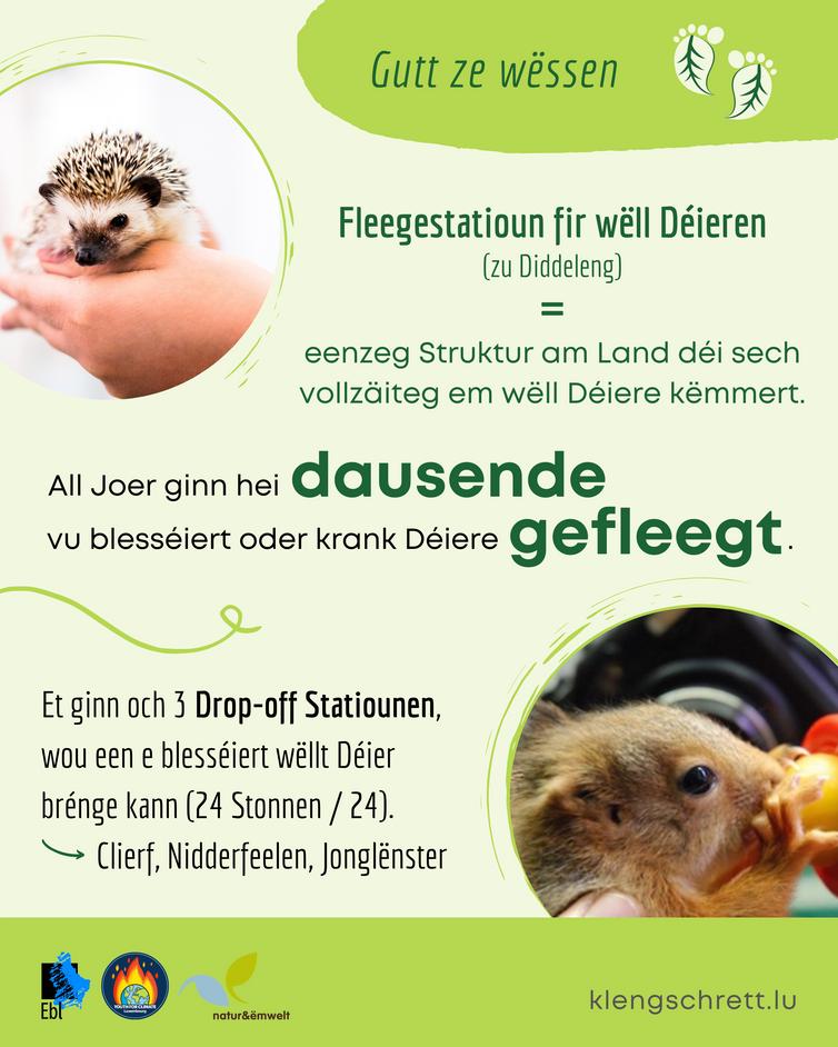 Kleng Schrett_Well Deieren_Fakt 5_LU.png