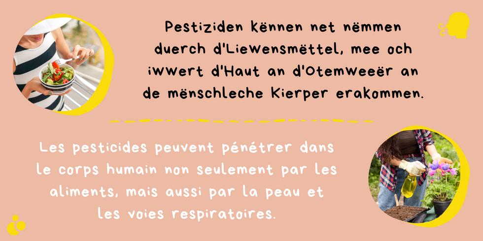 Kleng Schrett_Pestiziden_Fakt 5.png