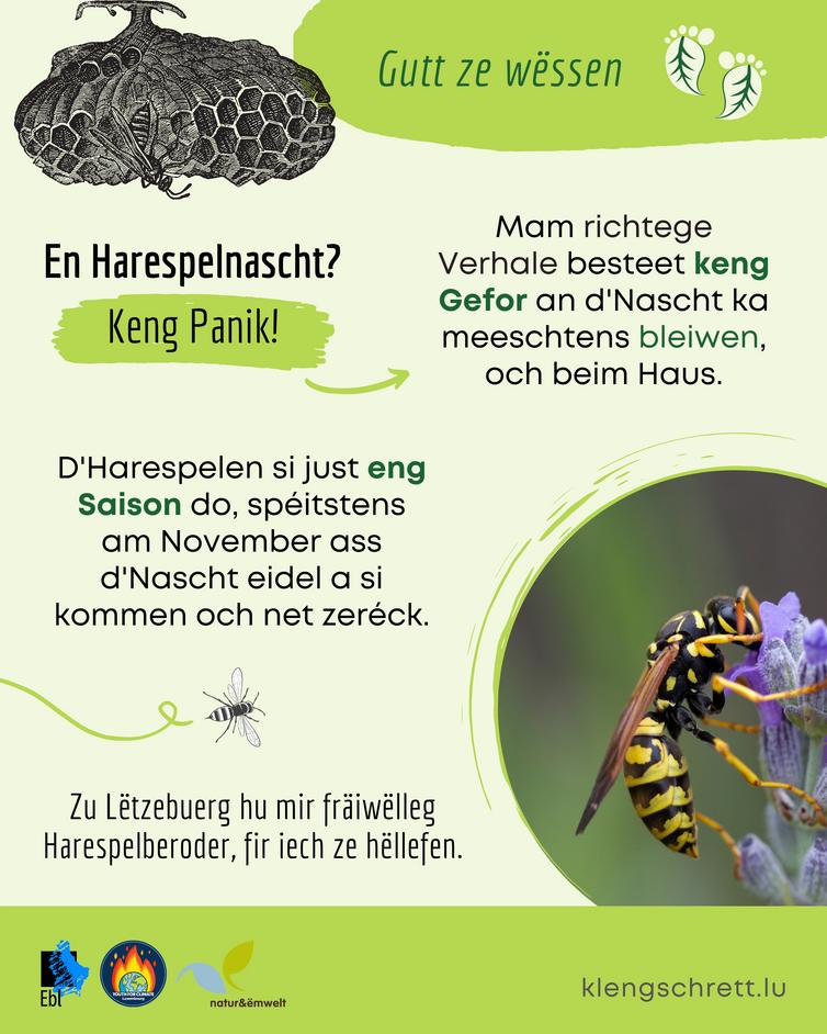 Kleng Schrett_Well Deieren_Fakt 9_LU.png