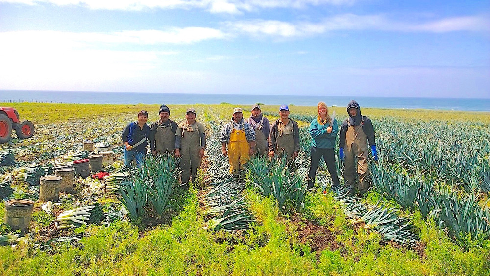 Farmworkers served by Sonrisas Dental Health
