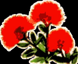 Pohutukawa-Flower posterised.png