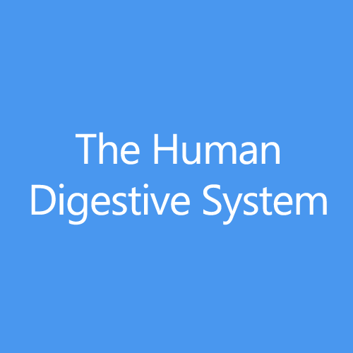 The Human Digestive System Title Button