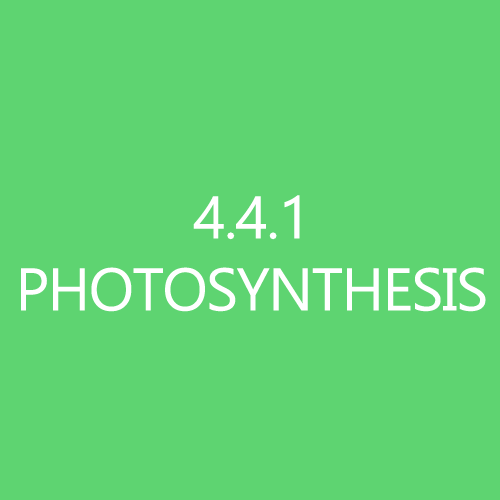 441Photosynthesis
