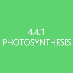441Photosynthesis