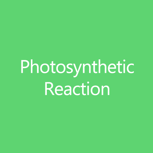 PhotosyntheticReactionTItleButton