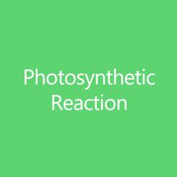 PhotosyntheticReactionTItleButton