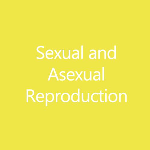 SexualandAsexualTitleButton