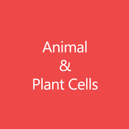 Animal and Plant Cells Title Button
