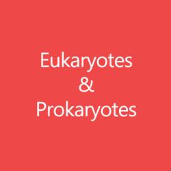 Eukaryotes and Prokaryotes Title Button