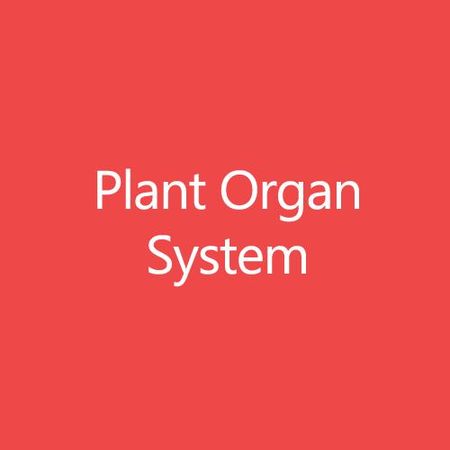 Plant Organ System Title Button