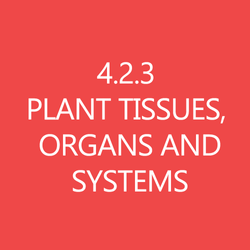 423 Plant Tissues Organs and Systems Title Button