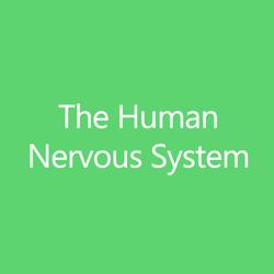 TheHumanNervousSystemTitleButton