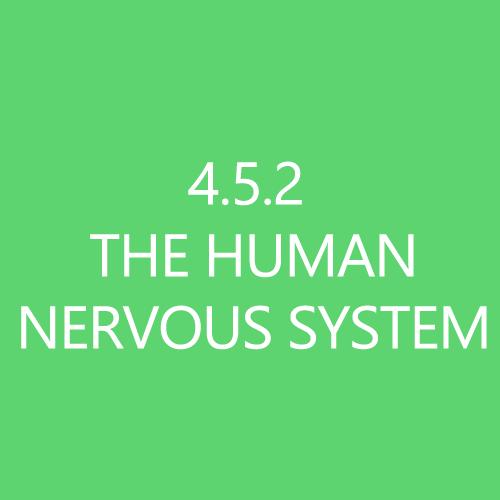 452HumanNervousSystemTitleButton