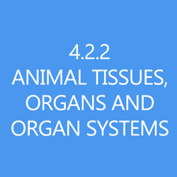422 Animal tissues organs and organ systems title button