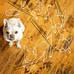 Mans Best Friend & Your Timber Floor