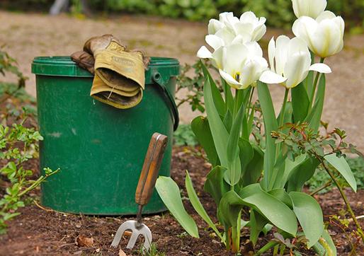 Dicas de como montar diferentes tipos de jardins na sua casa!