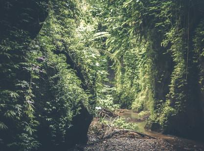 Saiba mais sobre como funciona o Plano de Manejo Florestal