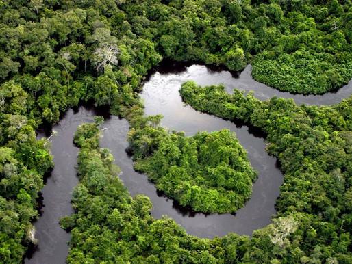 Existe uma alternativa à exploração predatória na Amazônia?