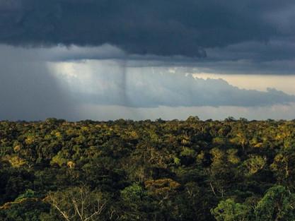 Como a floresta amazônica regula as precipitações em todo o país