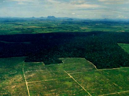 Fragmentação de Habitats: Causas e Implicações