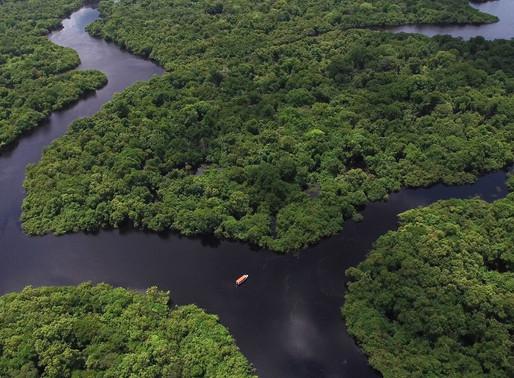 Você sabe de quem é a floresta amazônica?