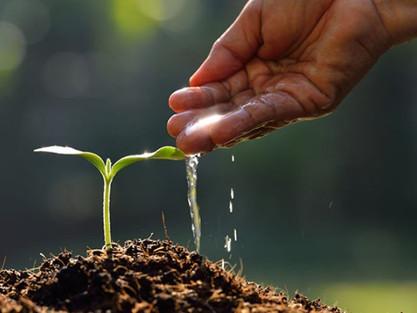 Conservação dos solos: Como essa prática impacta as nossas vidas?