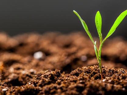 Importância do solo saudável